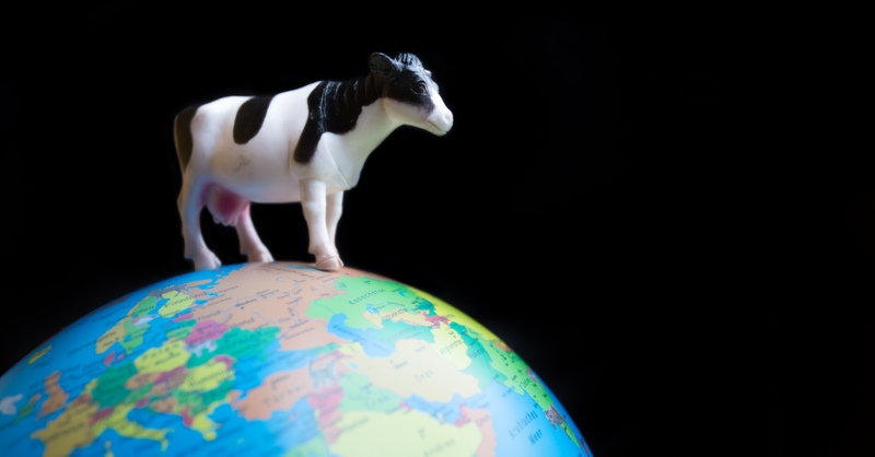 a cow stands on the earth